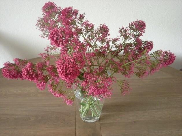 DIY-tuinbloemen-in-huis-MindandBeauty.nl-5