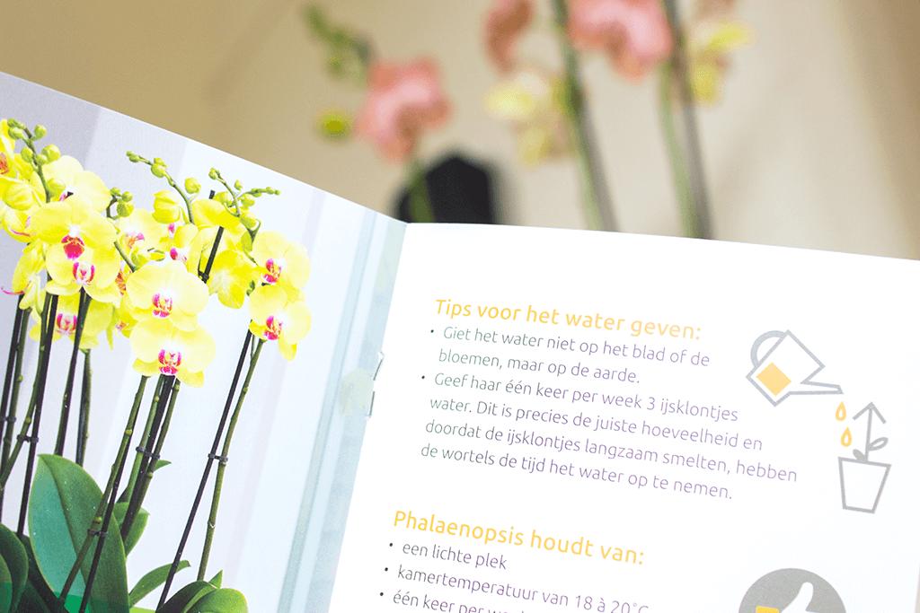 MindandBeauty.nl Review Orchidee Ravello Het Beste van de Kweker