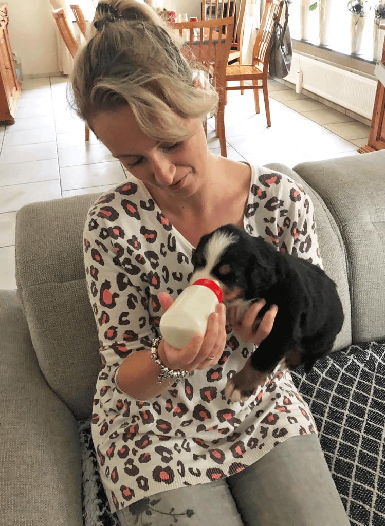 MindandBeauty.nl Berner Sennen puppy 2019