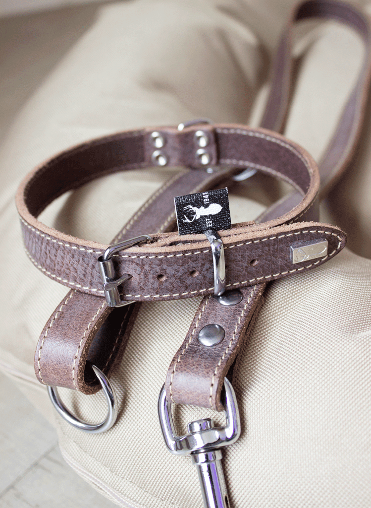 Hondenhalsband bruin Berner Sennen puppy