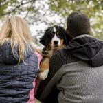 Berner sennenhond puppy Bollie