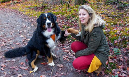 Coronavirus en een hond: hoe ga je daarmee om?